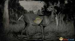 【荒野大镖客2】白尾鹿图鉴一览