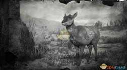 【荒野大镖客2】下加州母叉角羚图鉴一览